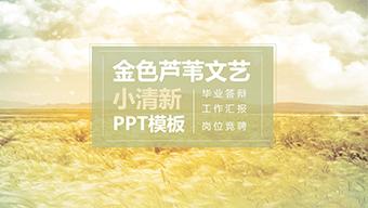 金色芦苇文艺小清新PPT模板